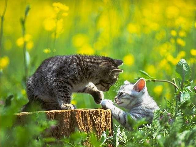 Смотреть а ты мой котик котик